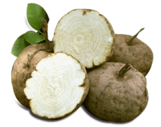 pueraria mirifica plant